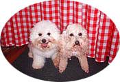Sulphur Springs Inn white dogs